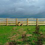 Fencing Contractors Berkshire, Hampshire & Surrey